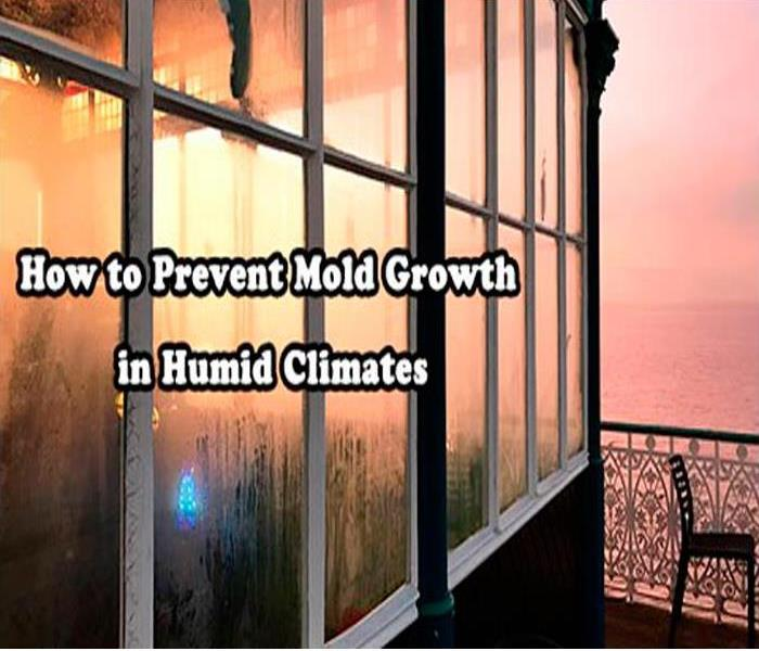 Mold Remediation Humid Climate and Mold Growth: How to Prevent?